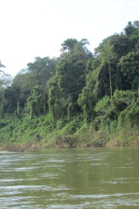 Jungle view from boat